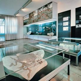 Steinheim_Museum